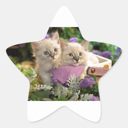 Pío juguetón de los gatitos fuera de una cesta de calcomanias forma de estrella
