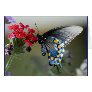 PIPEVINE BUTTERFLY Card