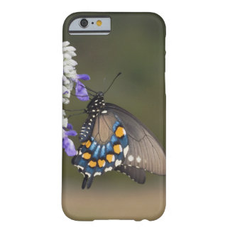 Pipevine Swallowtail, Battus philenor, adult Barely There iPhone 6 Case