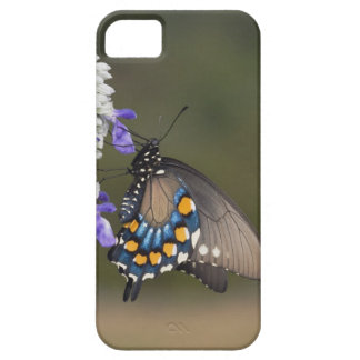 Pipevine Swallowtail, Battus philenor, adult iPhone SE/5/5s Case