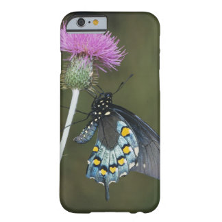 Pipevine Swallowtail, Battus philenor, adult on Barely There iPhone 6 Case