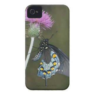 Pipevine Swallowtail, Battus philenor, adult on Case-Mate iPhone 4 Case