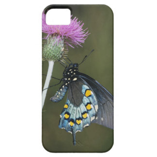 Pipevine Swallowtail, Battus philenor, adult on iPhone SE/5/5s Case