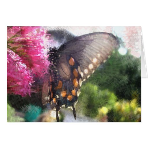 Pipevine swallowtail butterfly - Card