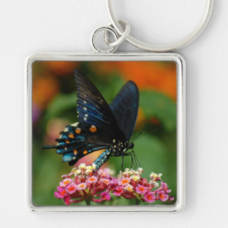 Pipevine Swallowtail Butterfly Keychain