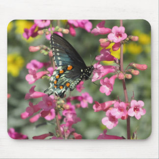 Pipevine Swallowtail Butterfly Mouse Pad