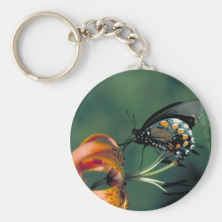Pipevine Swallowtail Butterfly on Turk's cap lily Keychain