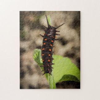 Pipevine Swallowtail Caterpillar desconcierta Rompecabezas Con Fotos