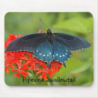Pipevine Swallowtail Mouse Pad