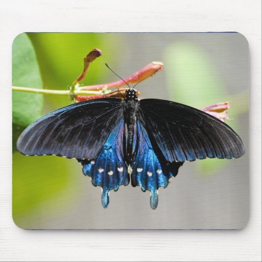 PIPEVINE SWALLOWTAIL - Mousepad