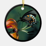 Pipevine Swallowtail Ornament