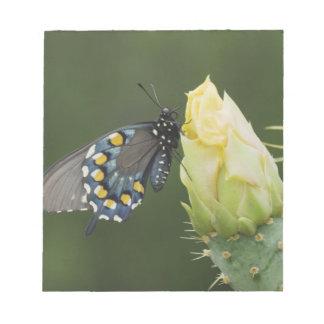 Pipevine Swallowtail, philenor de Battus, adulto e Bloc De Notas