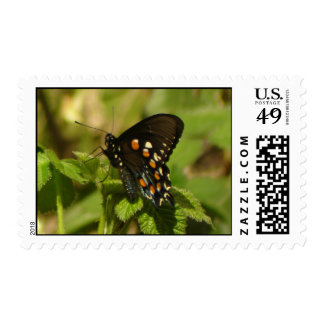 Pipevine Swallowtail Postage