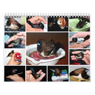 Pipi the adorable finch wall calendar