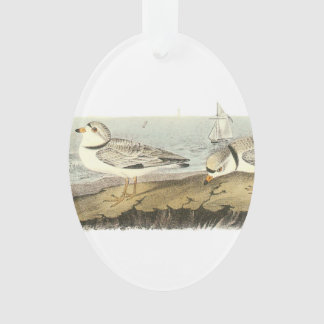 Piping Plover by Audubon Ornament