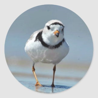 Piping Plover Classic Round Sticker
