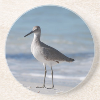 Piping Plover Coaster