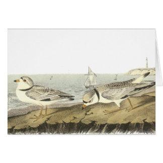 Piping Plover, John Audubon Card