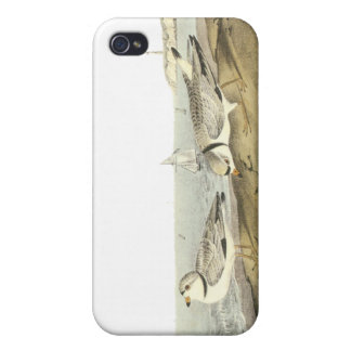 Piping Plover, John Audubon Covers For iPhone 4