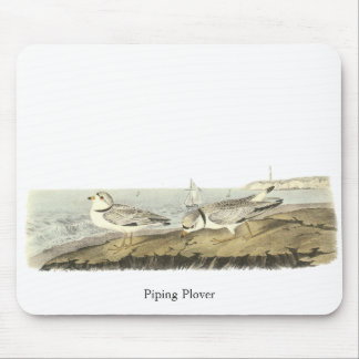 Piping Plover, John Audubon Mouse Pad