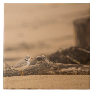 "Piping Plover Large (6"" X 6"") Ceramic Photo Tile"