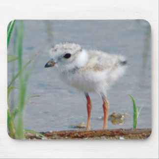 Piping Plover Mouse Pad