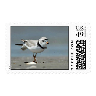 Piping plover on beach postage stamps
