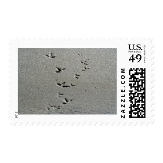 Piping Plover Prints in the Sand Stamps