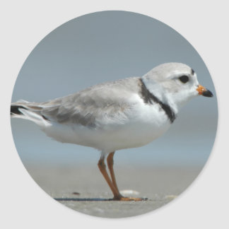 Piping Plover Stickers