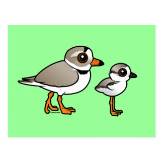 Piping Plover with chick Postcard