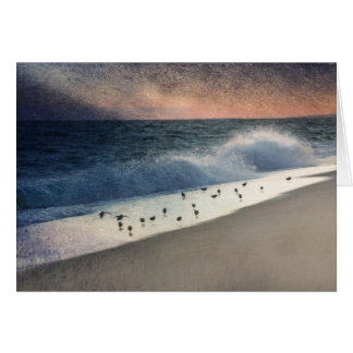 Piping Plovers and Peach and Blue Sunset Greeting Cards