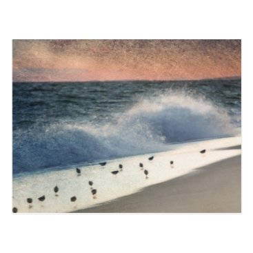 Beach Themed Piping Plovers and Peach and Blue Sunset Postcard