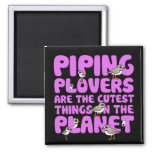 Piping Plovers are the Cutest Things on the Planet 2 Inch Square Magnet