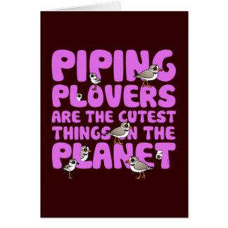 Piping Plovers are the Cutest Things on the Planet Card