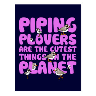 Piping Plovers are the Cutest Things on the Planet Postcard