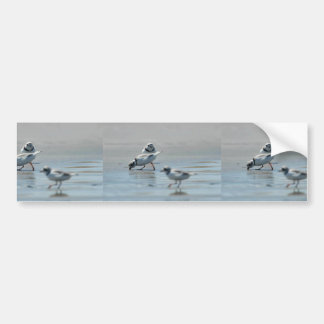 Piping Plovers eating on the beach Bumper Sticker