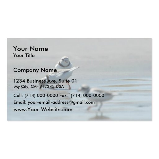 Piping Plovers eating on the beach Business Card Templates