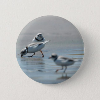 Piping Plovers eating on the beach Pinback Button