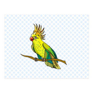 Pippin Parrot Postcard