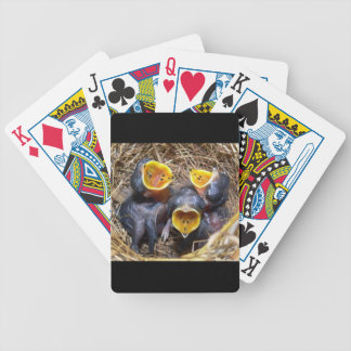 Pippit-closer and Australasian Pipit Bicycle Playing Cards