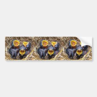 Pippit-closer and Australasian Pipit Bumper Sticker