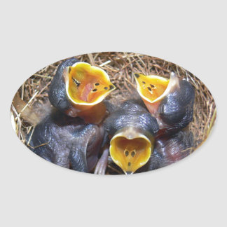 Pippit-closer and Australasian Pipit Oval Sticker
