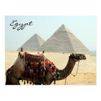 pirámide de Egipto del camello Tarjetas Postales