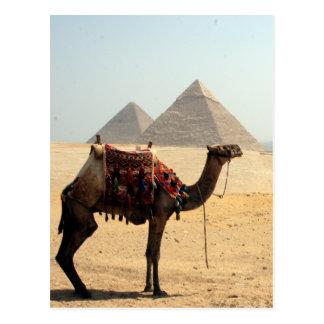 pirámides del camello tarjetas postales