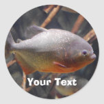 Piraña - Innocent que mira los pescados de Brown Etiqueta Redonda