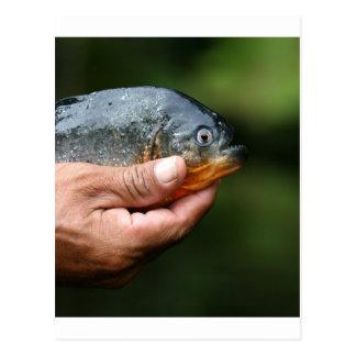 Piranha Amazon Peru Postcard