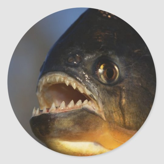 Piranha Close-Up Classic Round Sticker