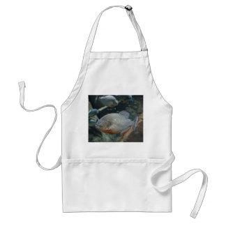 Piranha fish swimming color photograph adult apron