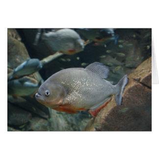 Piranha fish swimming color photograph card