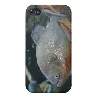 Piranha fish swimming color photograph iPhone 4 cases